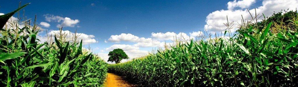 agriculture-numerique